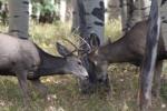 hunting in gunnison
